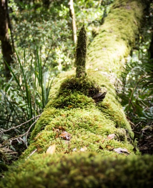 Moss-covered deadfall